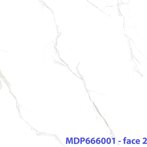 MD P666001 _face2 xxx